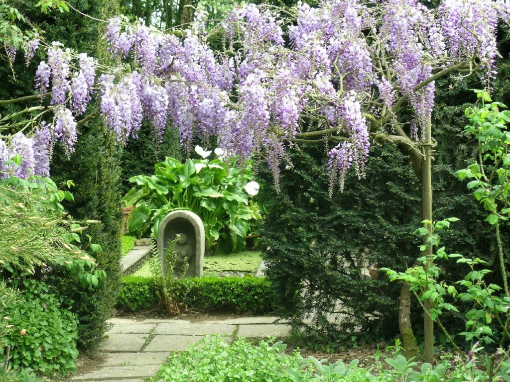 3721 Парк цветов Асикага
