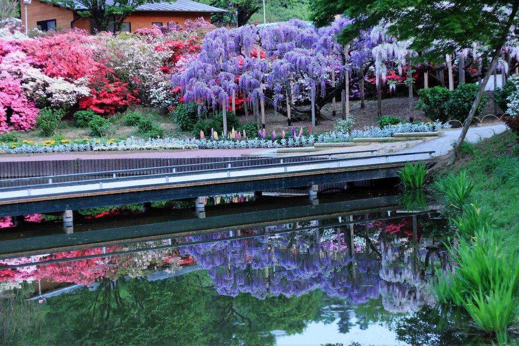 4172 Парк цветов Асикага