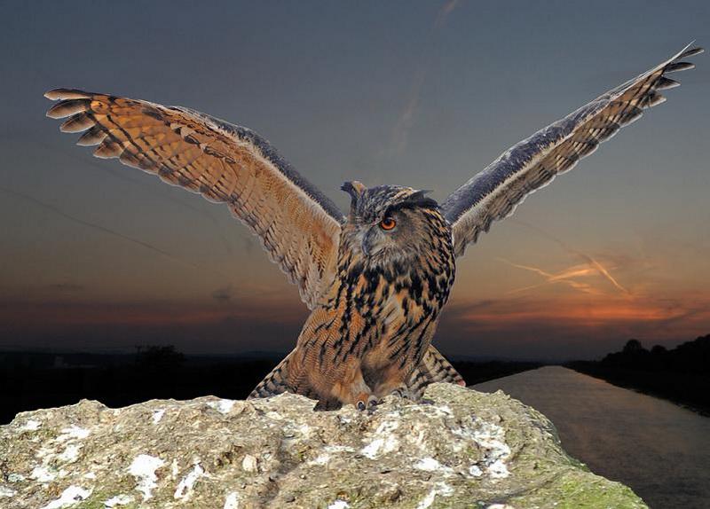 Тип структуры лапы совы называется