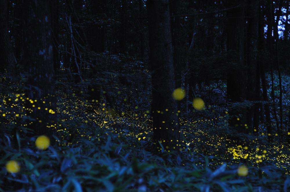 43 Светлячки Цунеяки Хирамацу