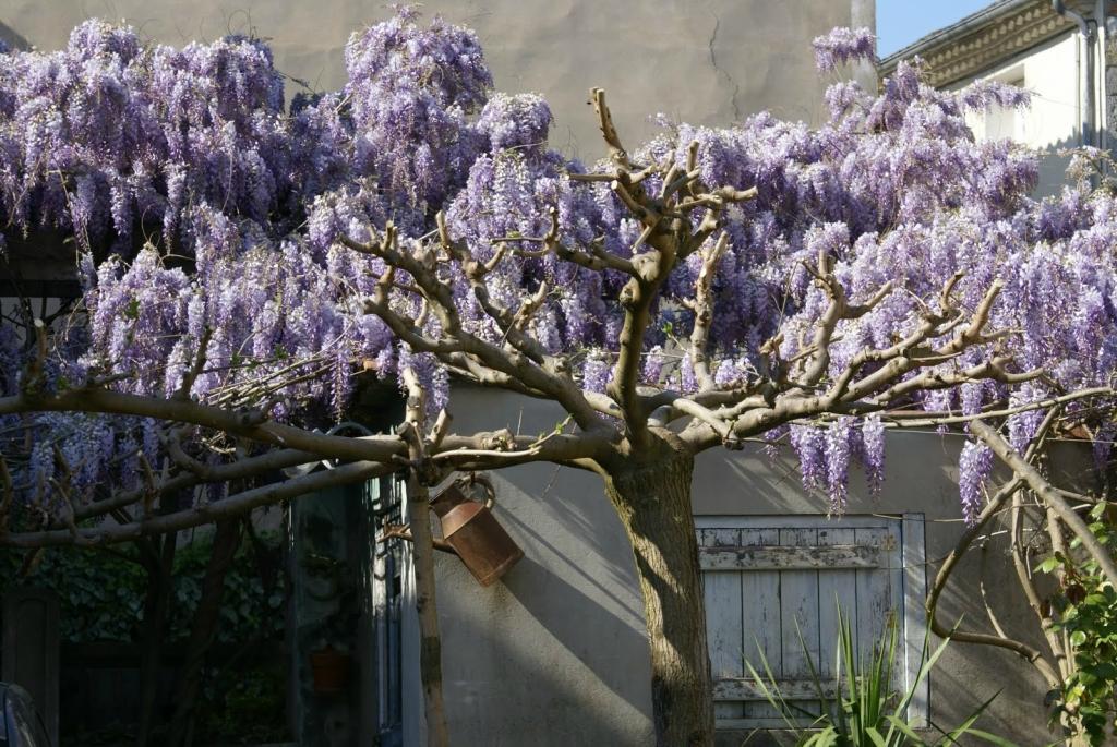 4319 Парк цветов Асикага