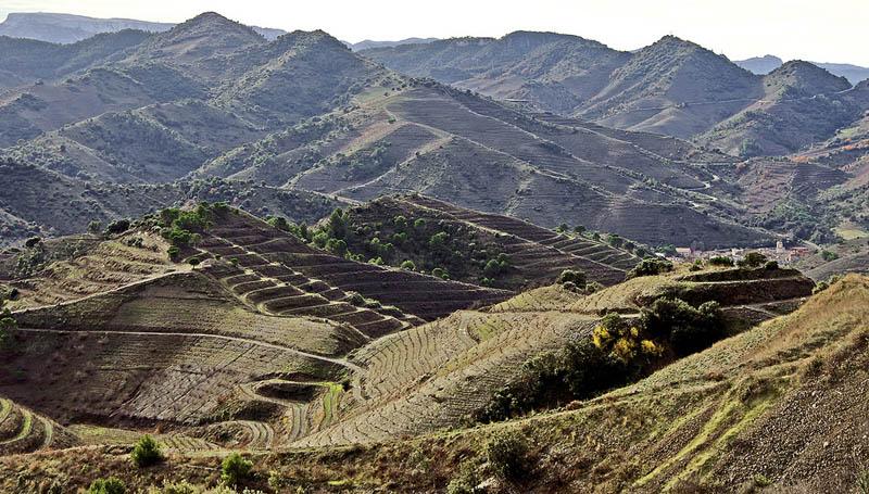 433 35 самых красивых виноградников мира