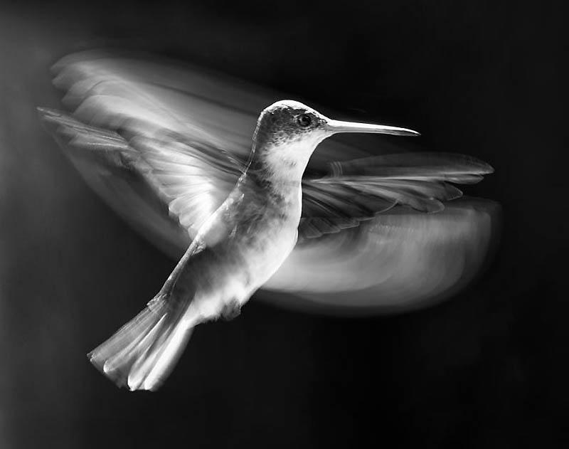 Волшебство полета