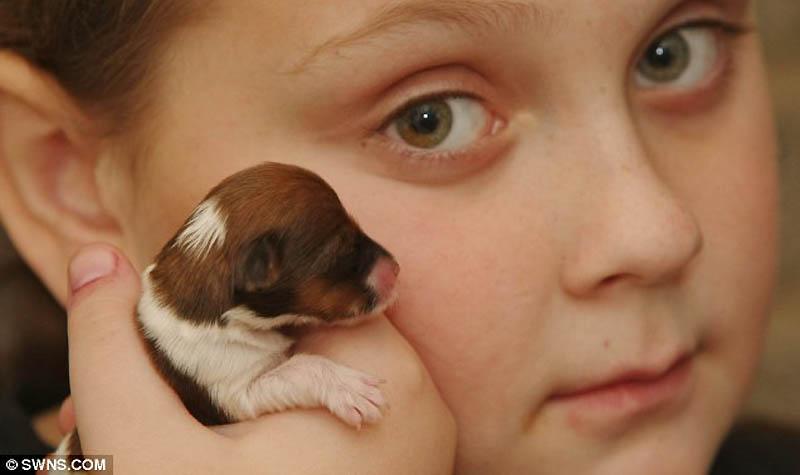 5138 Микро щенок по кличке Чудо