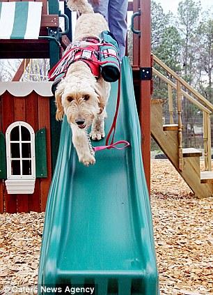 5169 Собака   спасательный круг для 3 летней Алиды