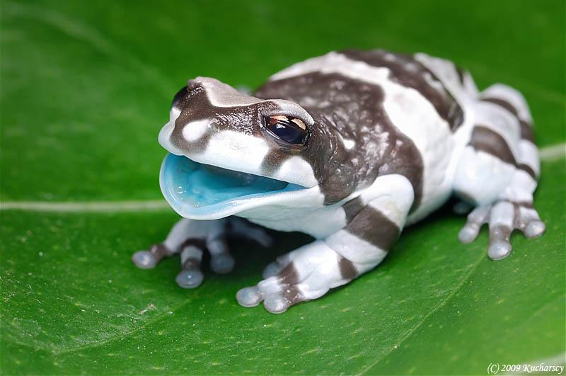 517 Несколько фактов о лягушках