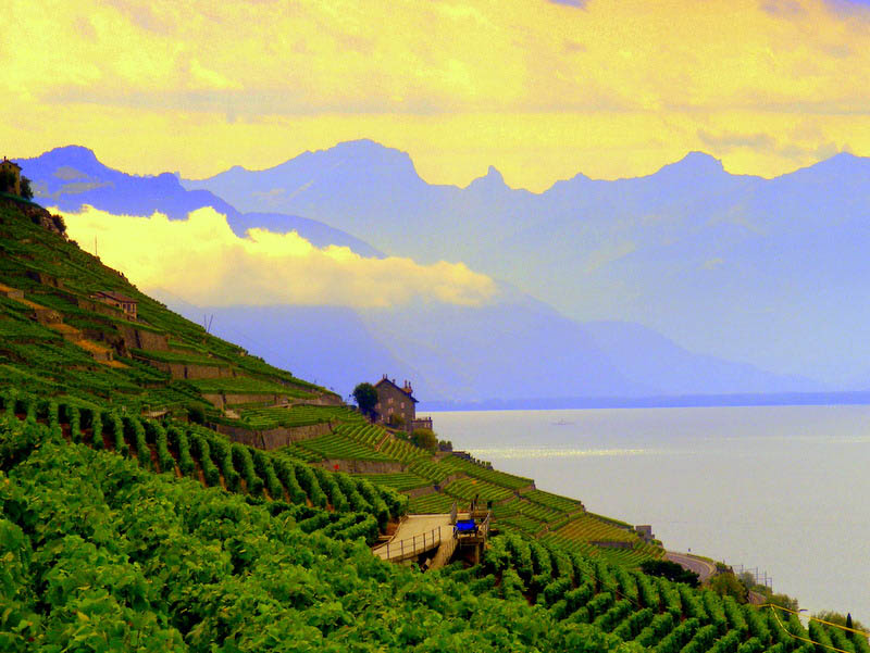 527 35 самых красивых виноградников мира