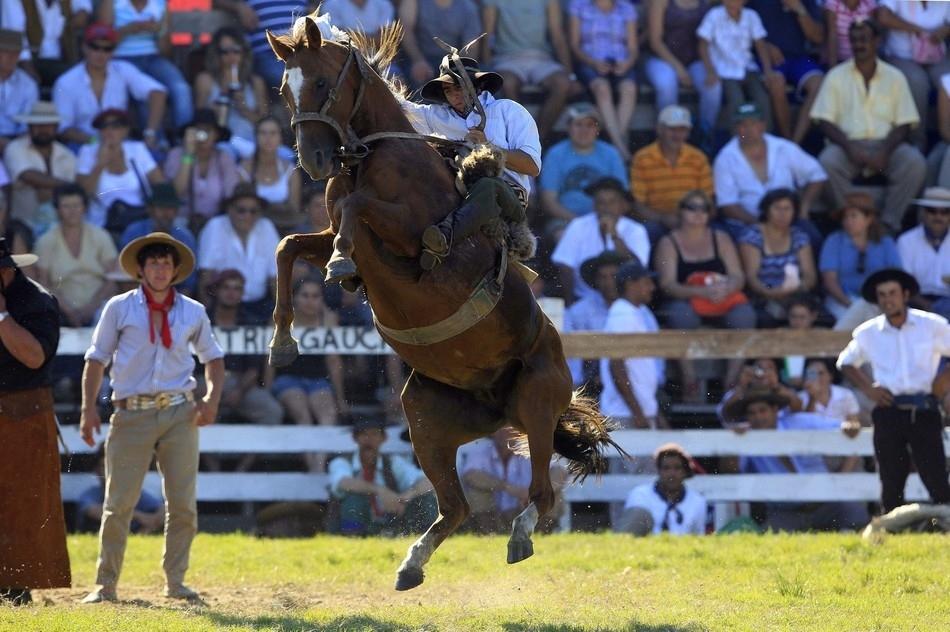 573 Укрощение необъезженных лошадей: 20 удивительных кадров