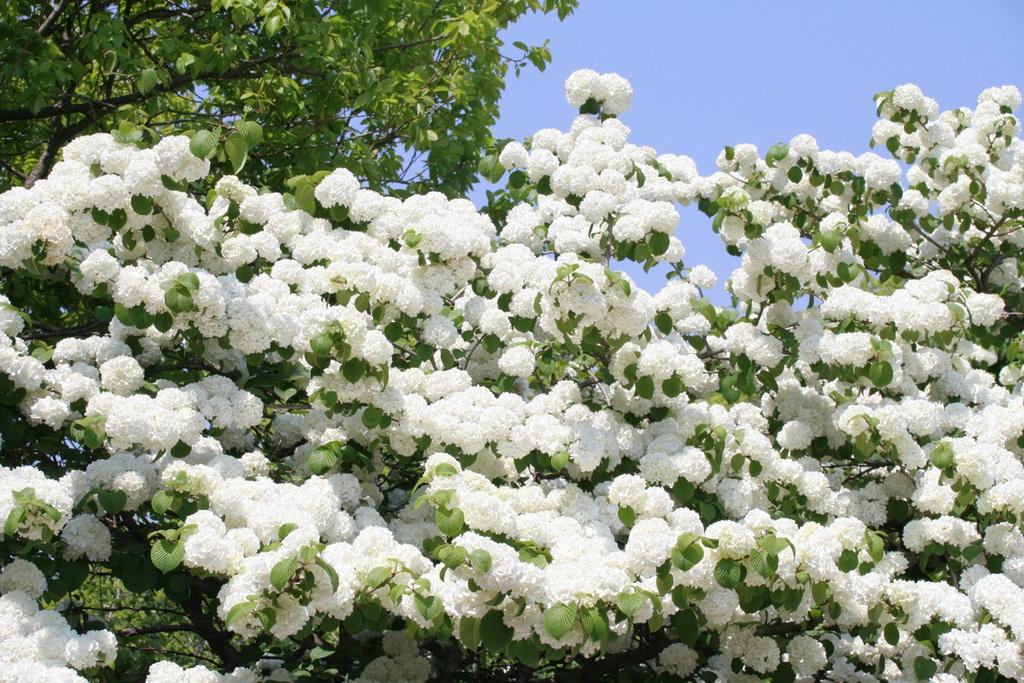 6158 Парк цветов Асикага