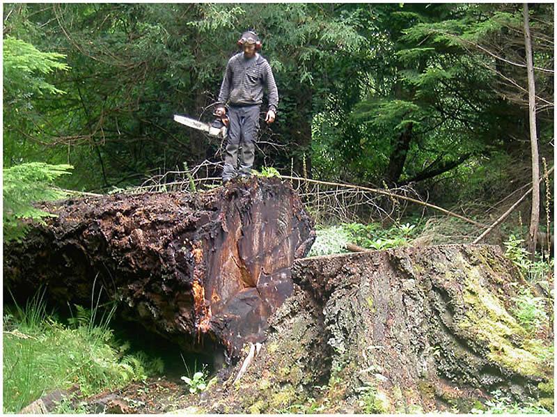 619 Вторая жизнь срубленных деревьев