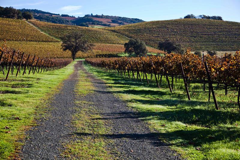 627 35 самых красивых виноградников мира