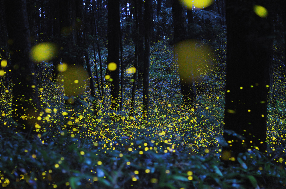 63 Светлячки Цунеяки Хирамацу