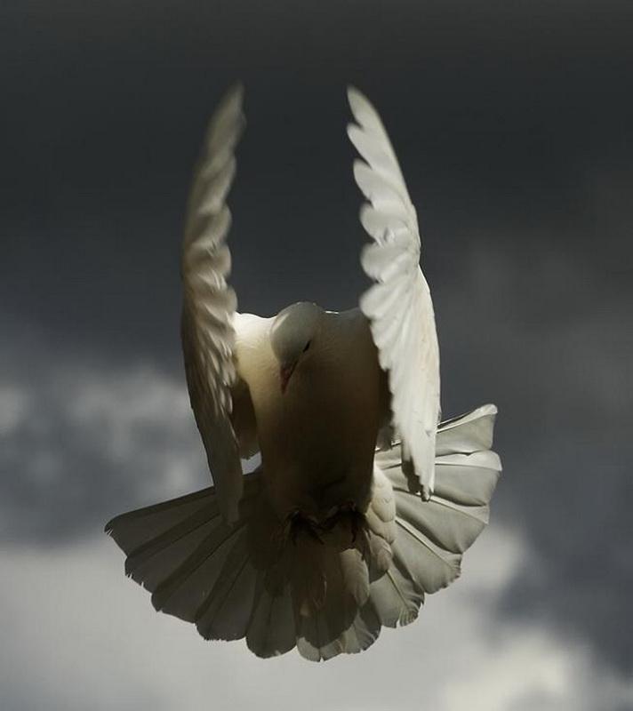 637 Волшебство полета
