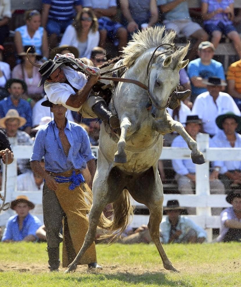 673 830x990 Укрощение необъезженных лошадей: 20 удивительных кадров