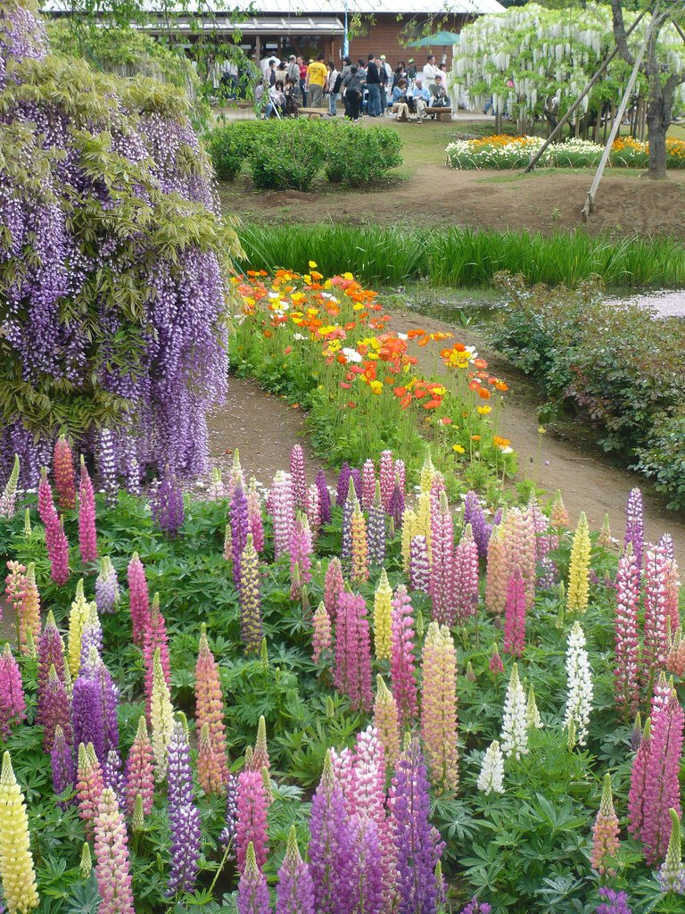 7154 Парк цветов Асикага