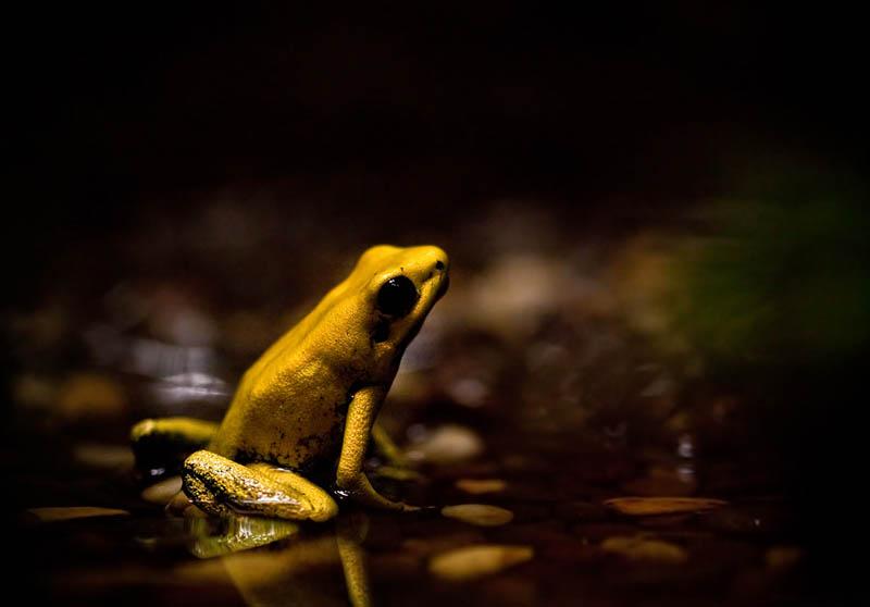 717 Несколько фактов о лягушках