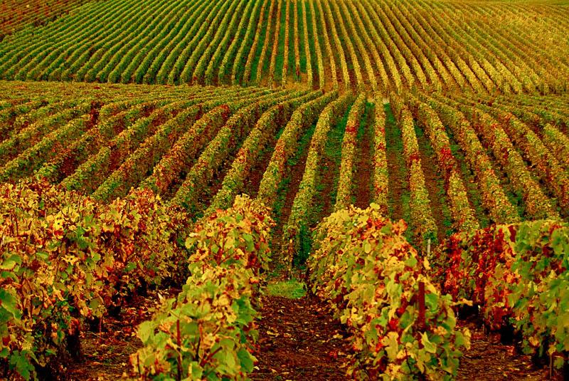 727 35 самых красивых виноградников мира