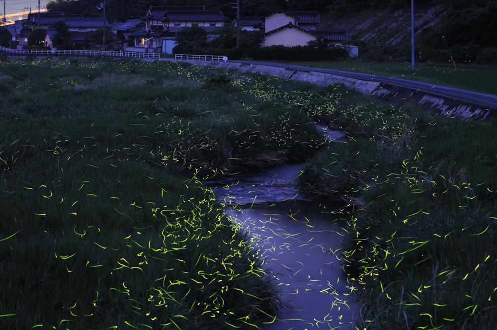 73 Светлячки Цунеяки Хирамацу