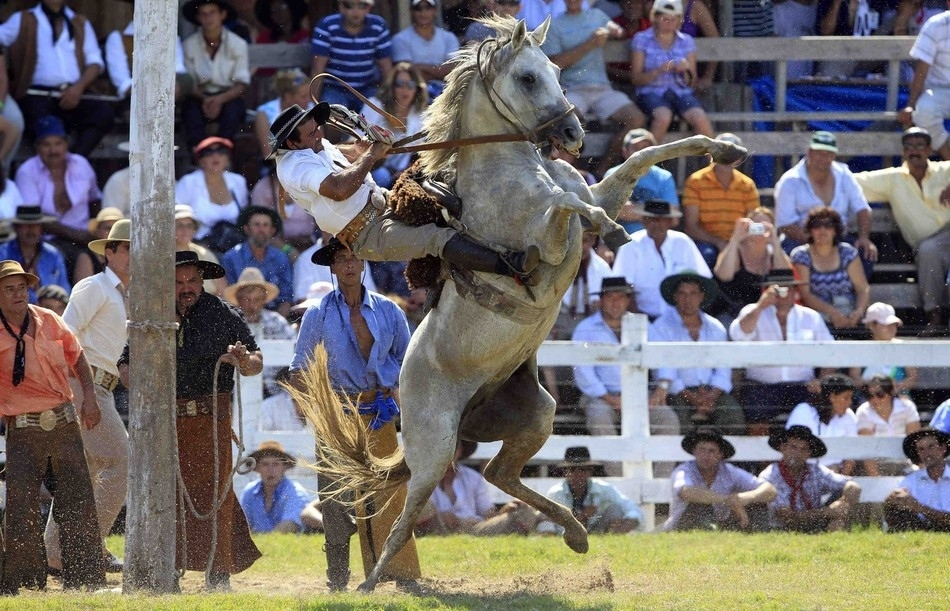 773 Укрощение необъезженных лошадей: 20 удивительных кадров