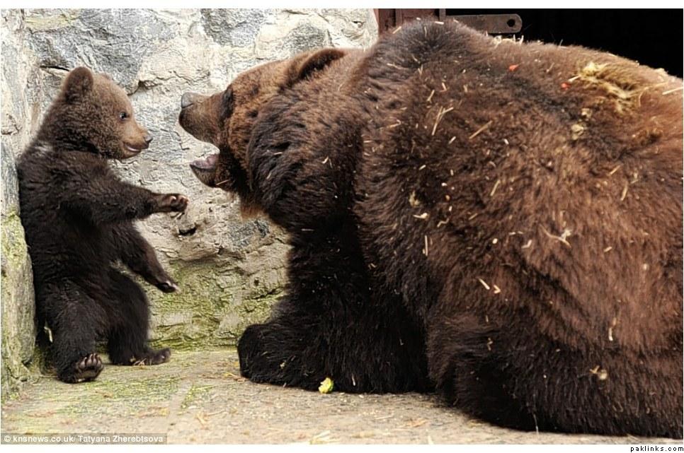 7935707450 Воспитание по медвежьи