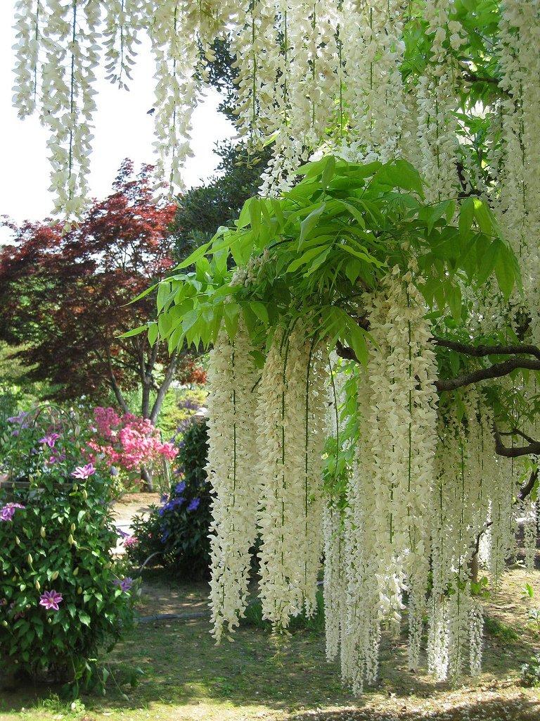 8149 Парк цветов Асикага