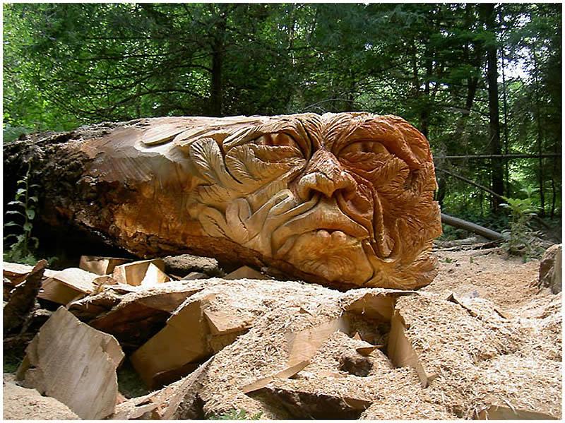 818 Вторая жизнь срубленных деревьев