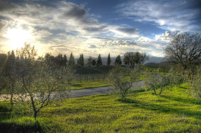 826 35 самых красивых виноградников мира