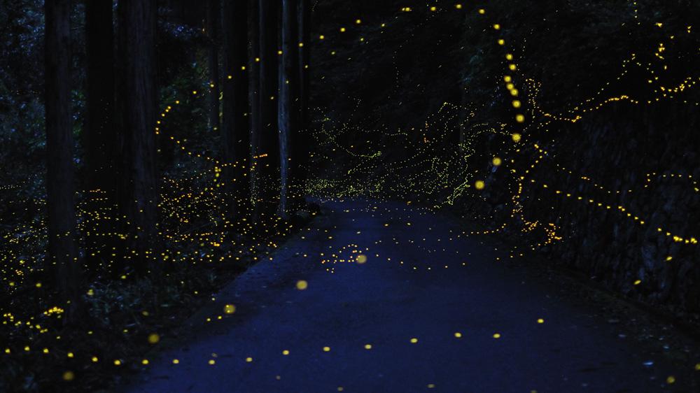 83 Светлячки Цунеяки Хирамацу
