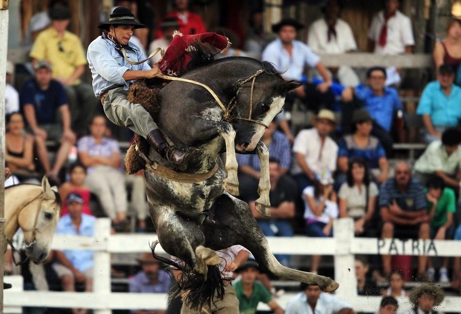 870 Укрощение необъезженных лошадей: 20 удивительных кадров