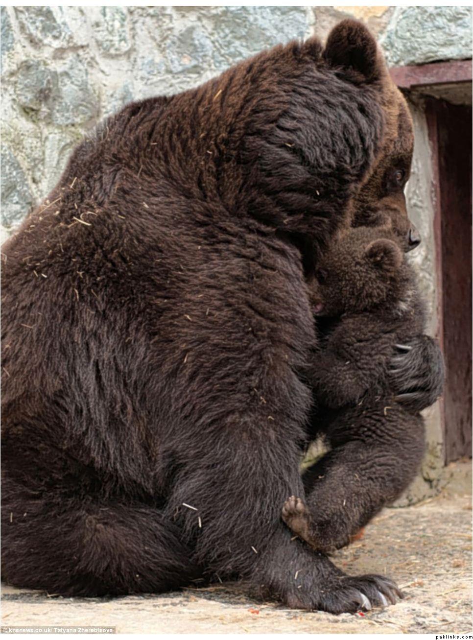 874504842 Воспитание по медвежьи