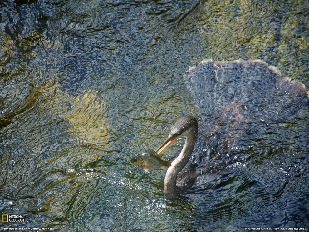 http://bigpicture.ru/wp-content/uploads/2012/03/9-990x742.jpg