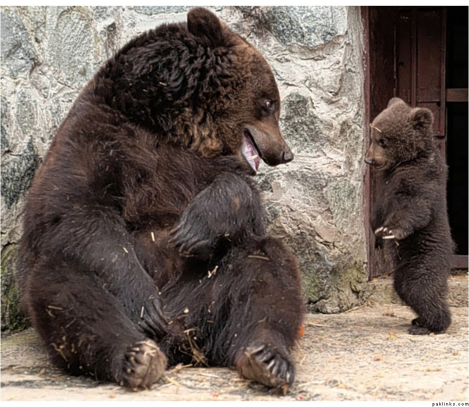 90745209472 Воспитание по медвежьи