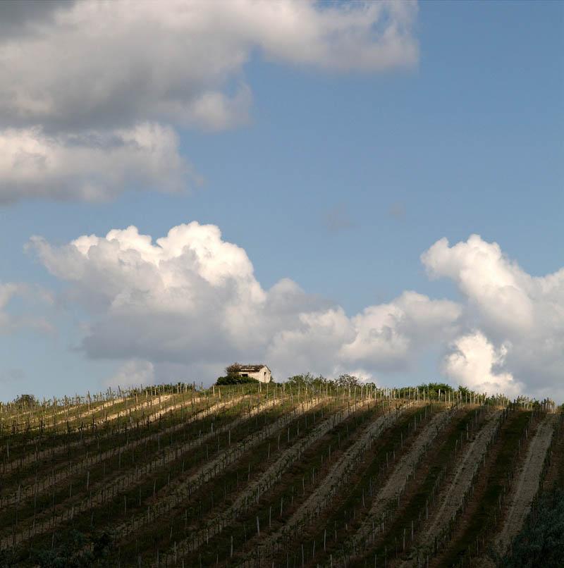 925 35 самых красивых виноградников мира