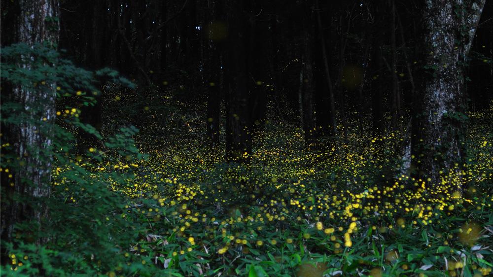 93 Светлячки Цунеяки Хирамацу