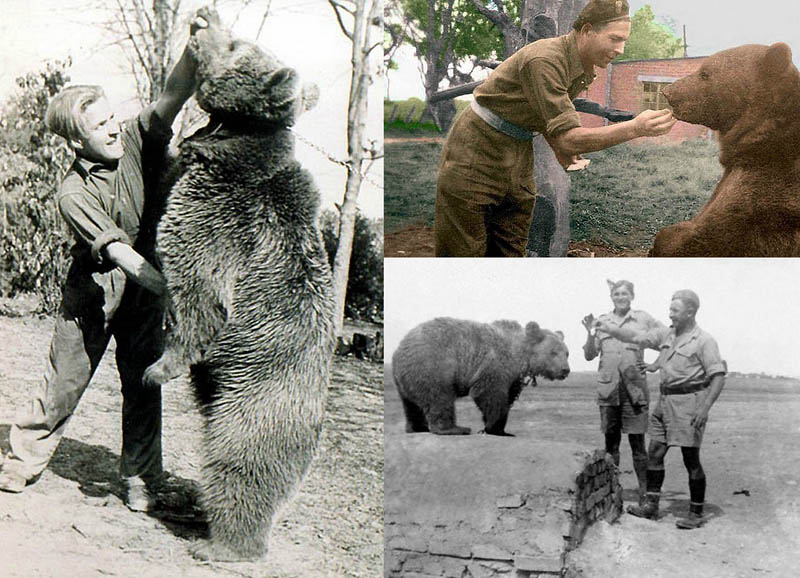 BIGPIC27 Необычные солдаты Второй мировой: Войтек