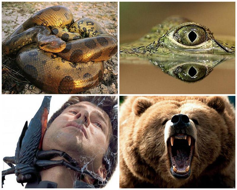 BIGPIC85 10 животных, которые могут тебя съесть
