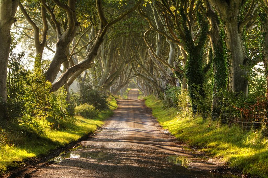 Dark Hedges01 Древесный тоннель   аллея из буков в Ирландии