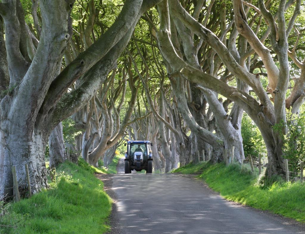 Dark Hedges02 Древесный тоннель   аллея из буков в Ирландии