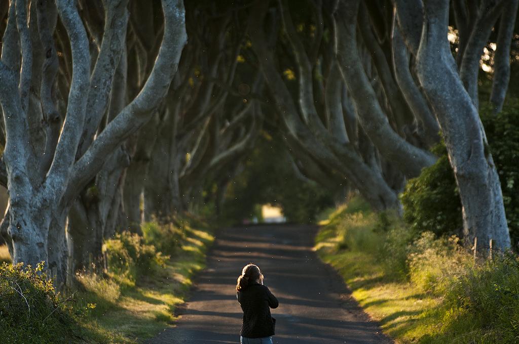 Dark Hedges05 Древесный тоннель   аллея из буков в Ирландии