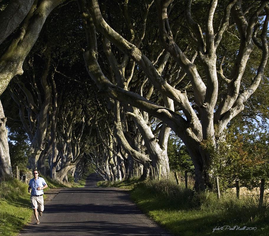 Dark Hedges06 Древесный тоннель   аллея из буков в Ирландии