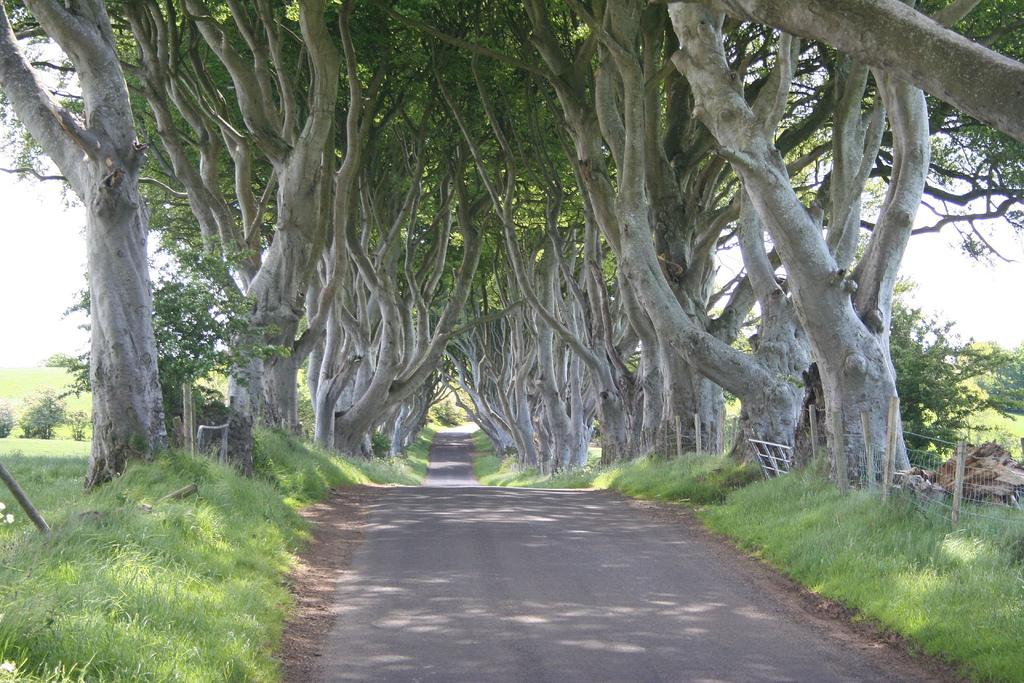Dark Hedges07 Древесный тоннель   аллея из буков в Ирландии