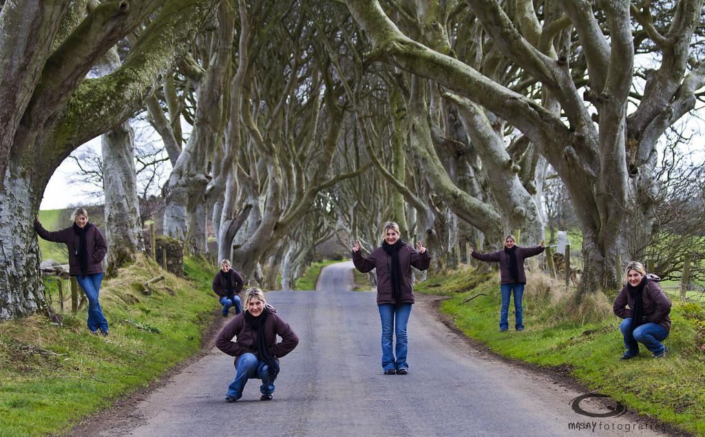 Dark Hedges11 Древесный тоннель   аллея из буков в Ирландии