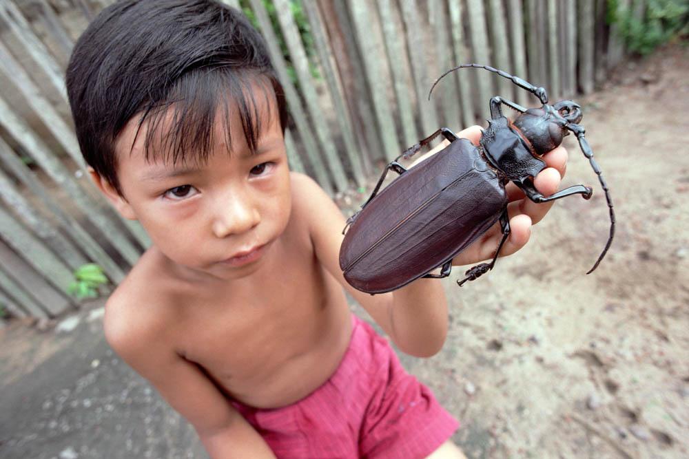 bug05 Самый большой в мире жук