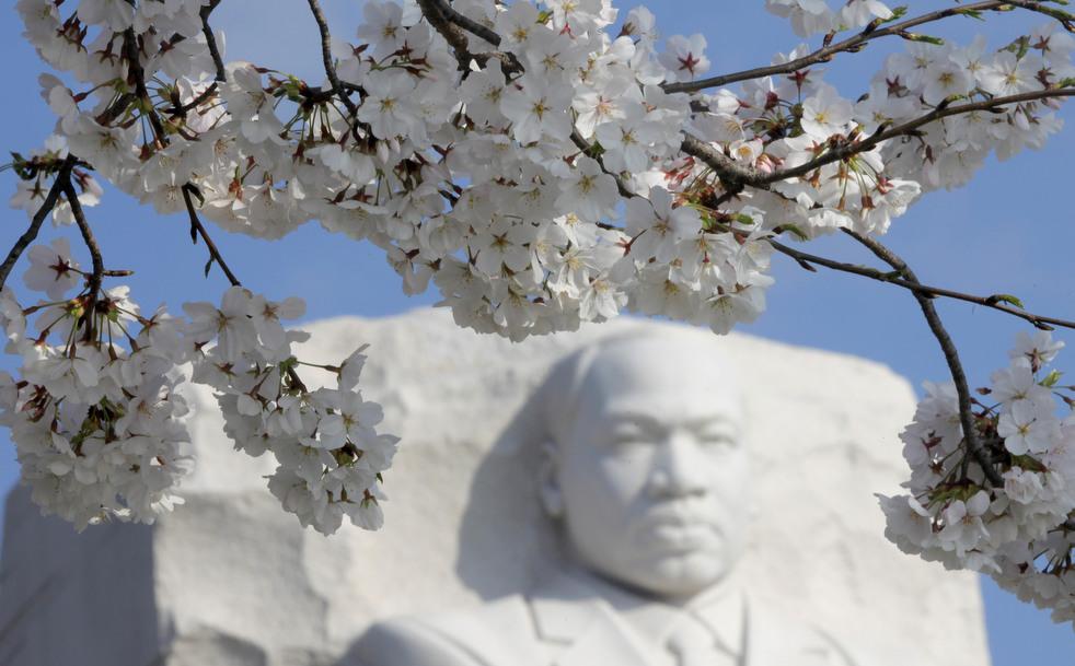 cherry c Фестиваль цветения сакуры вВашингтоне 2012