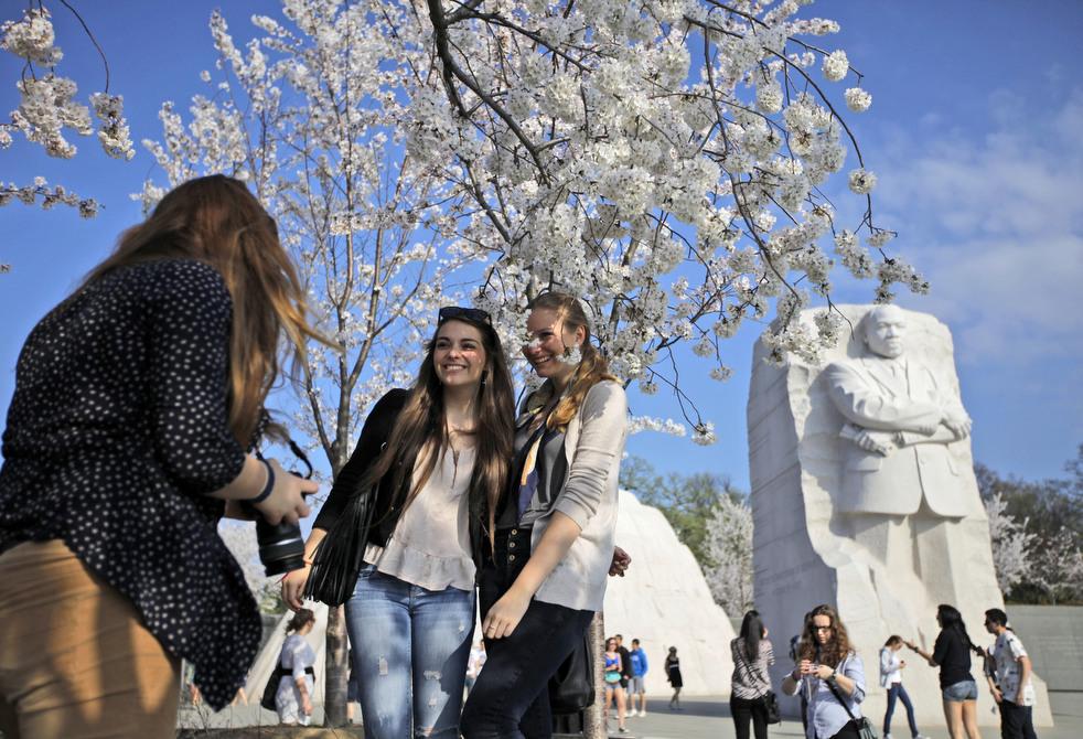 cherry d Фестиваль цветения сакуры вВашингтоне 2012