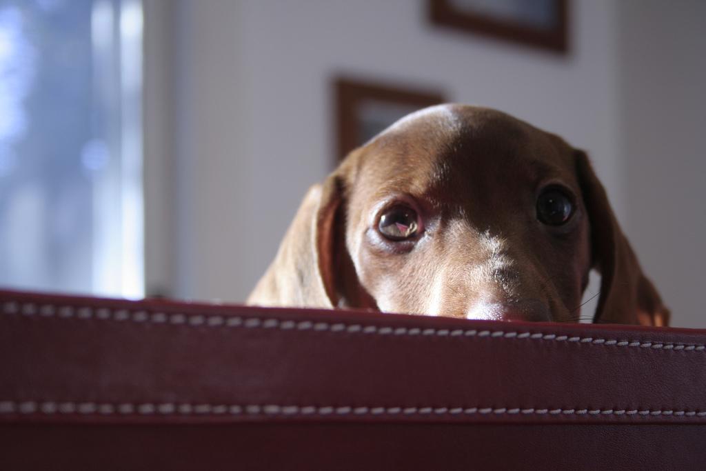 puppy01 Грустные щеночки