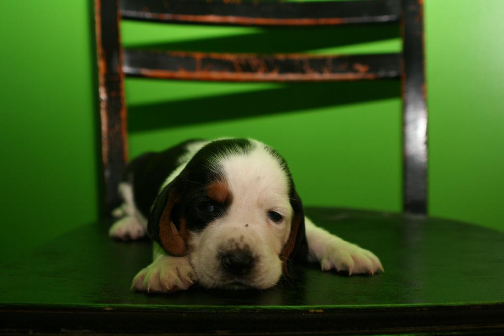 puppy02 Грустные щеночки