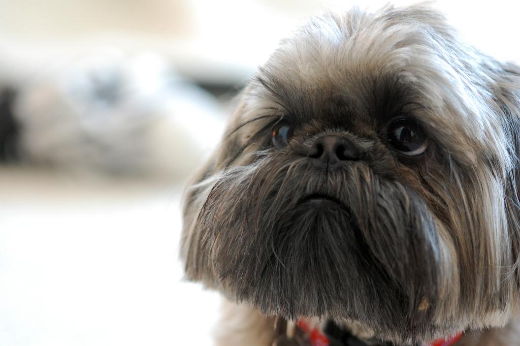 puppy03 Грустные щеночки