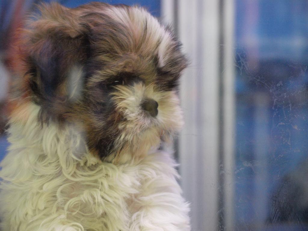 puppy04 Грустные щеночки