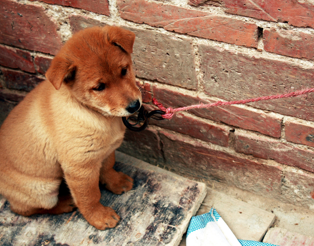 puppy05 Грустные щеночки